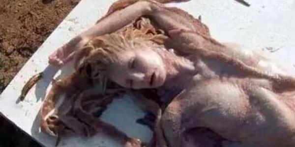 Ritrovati resti di sirena a Lampedusa: che bufala!